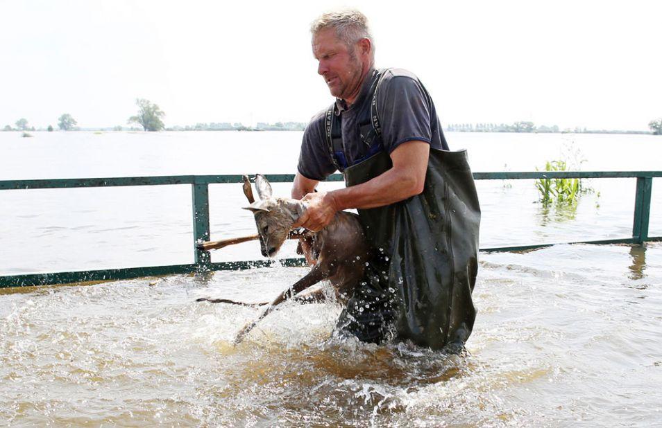 fisherman rescues deer in germany