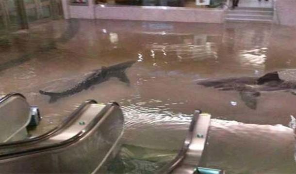kuwait shark tank