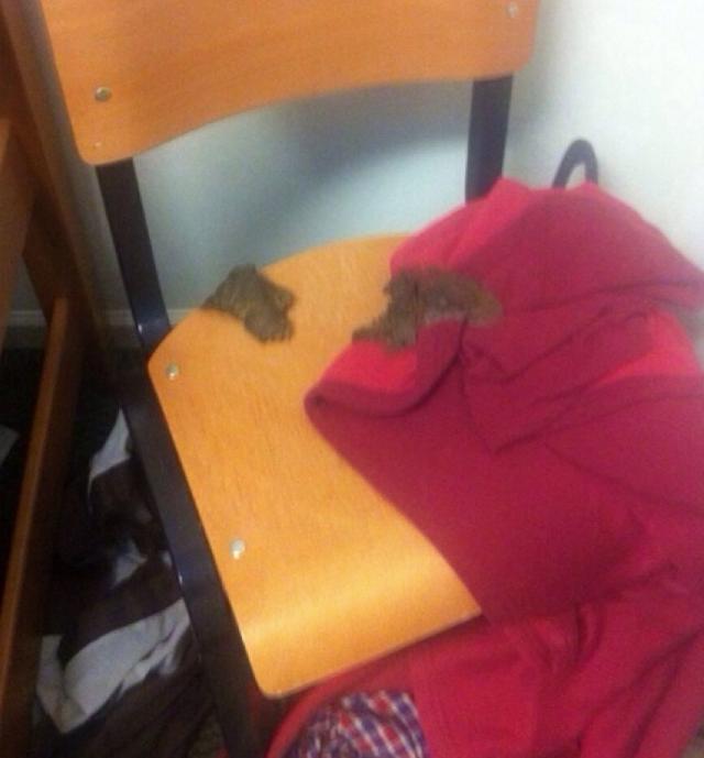 Bedroom Poop