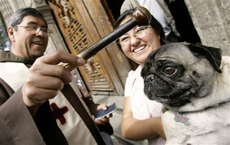 Catholics Blessing Animals - Stupid Dog