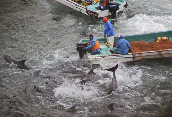 Japan Dolphin Hunt