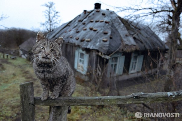 Russia With Love - Cat Hero Murka from Bashkiria