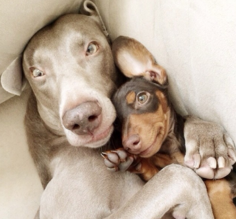 Harlow And Sage: 2 Dogs Who Take Awesome Selfies