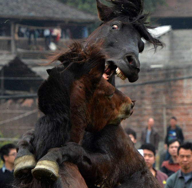 CHINA-LIFESTYLE-NEW YEAR-WILDLIFE-RIGHTS