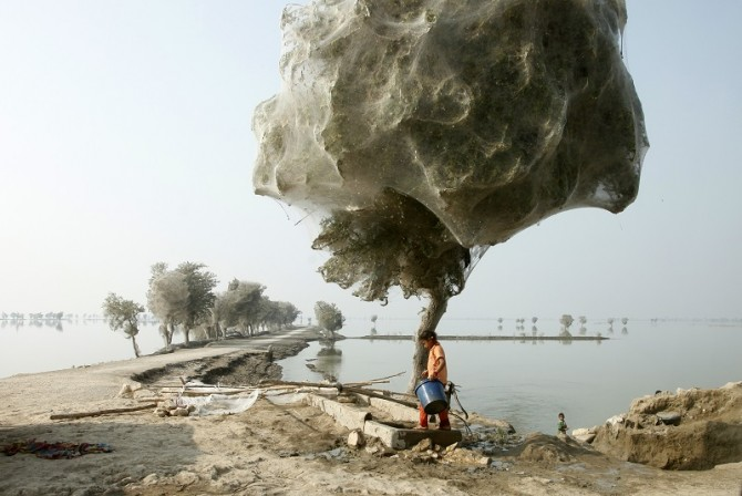Cocooned Trees 1