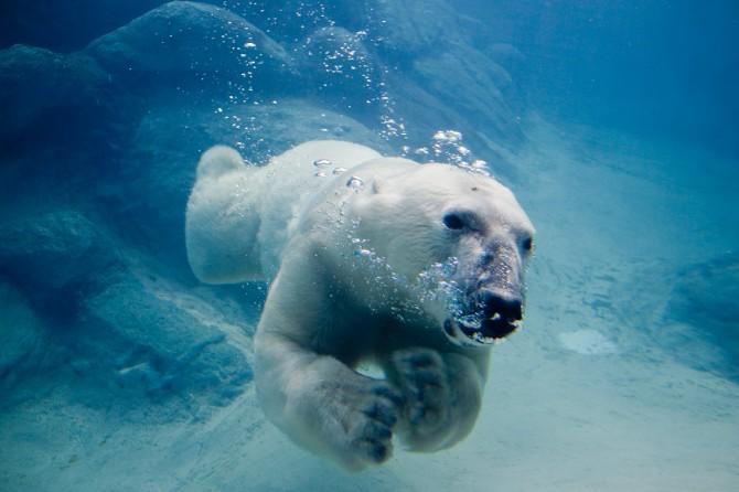 Darwin Awards - Stupid Ways To Die - Polar bear