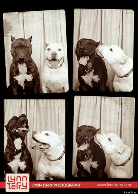 Pit Bull Photo Booth 2
