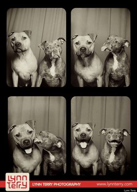 Pit Bulls Photo Booth 1