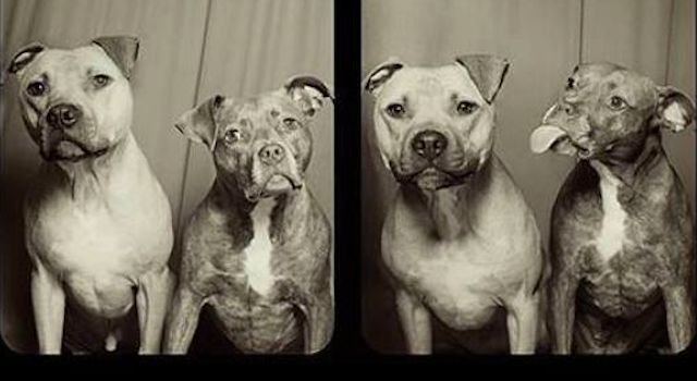 Pit Bulls Photobooth