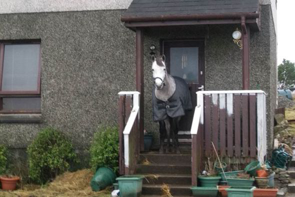 Weird News Week - Grey Lady Too evicted horse