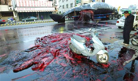 Exploding Dead Whales - Kent Motorway Taiwan 2