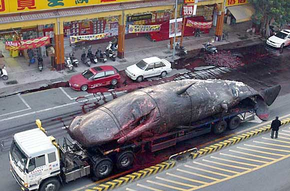 Exploding Dead Whales - Kent Motorway Taiwan