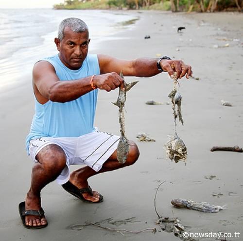 La Brea Coffee Beach Trinidad and Tobago Spill dead fish