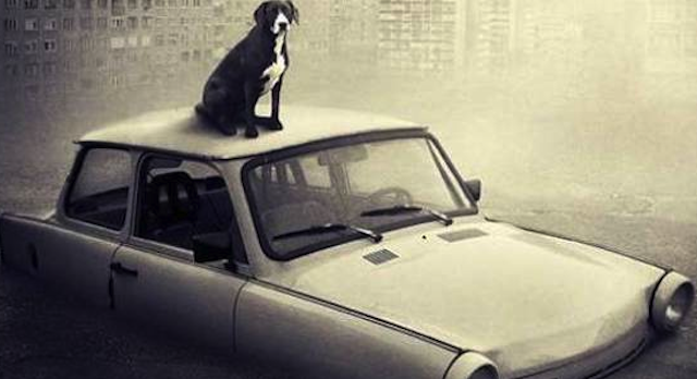 Surreal Homeless Dog Pictures