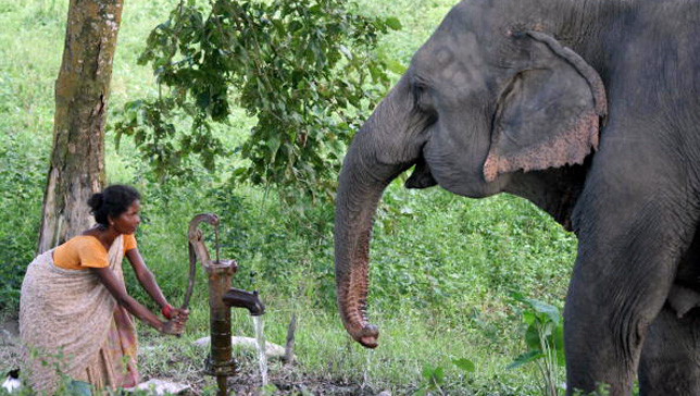 Weird News - elephant saves baby