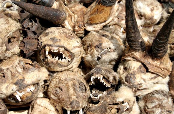 Akodessewa Voodoo Market Togo - heads