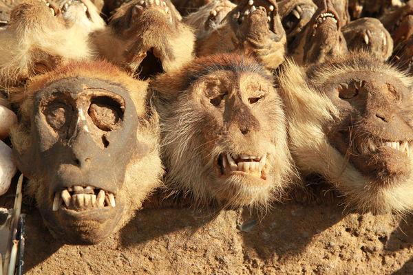 Akodessewa Voodoo Market Togo - monkeys