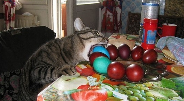 Awesome Photos From Russia With Love - cat eggs