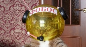 Awesome Photos From Russia - cool cat