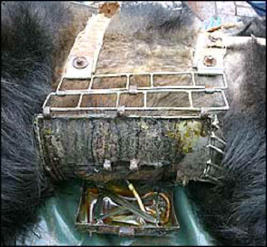 Bile Bear Farming China - Metal Box