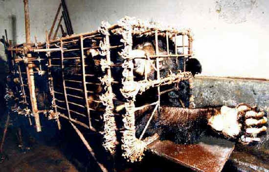 Bile Bear Farming China - front