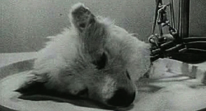 Russian Dog Head Experiment
