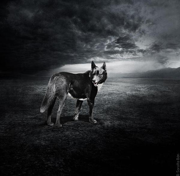 Rescue-Dogs-3