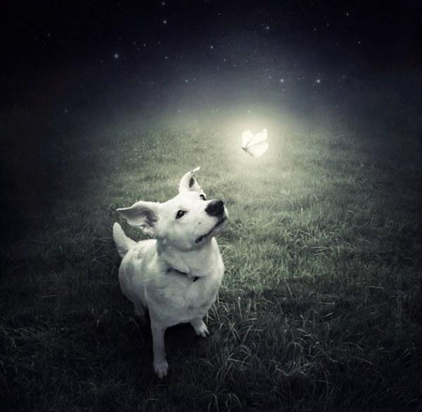 Rescue-Dogs-6