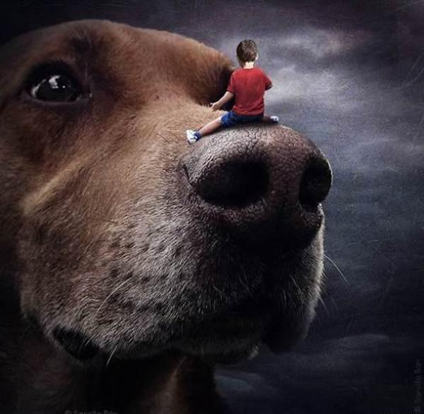 Rescue-Dogs-8