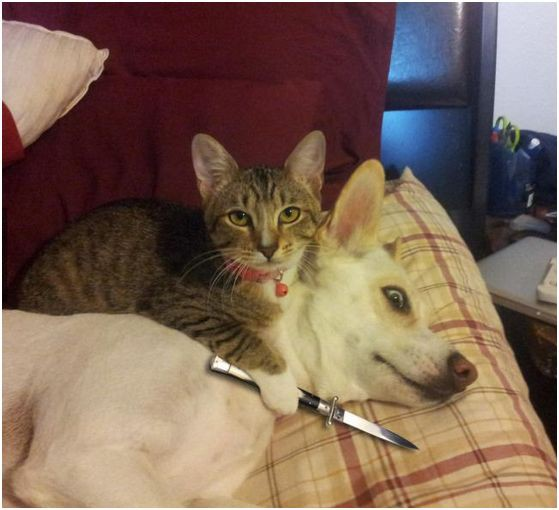 Russia With Love - cat knife and dog