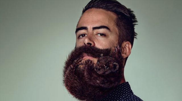 Animal Beard Hipster