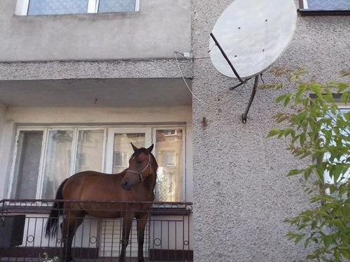 Awesome Photos From Russia With Love - Horse balcony