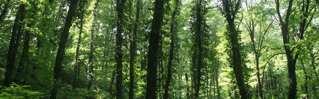 Facts About Serbia - Forest