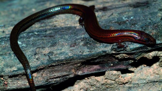Weird And Wonderful New Species 6