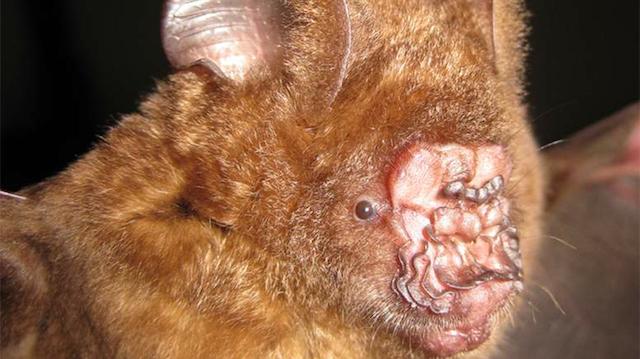 Weird And Wonderful New Species Featured