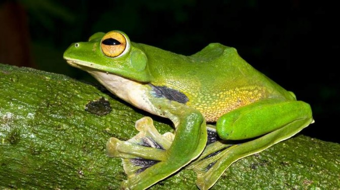Weird And Wonderful New Species Frog