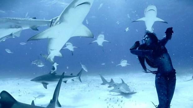 dance ocean shark - photo #17
