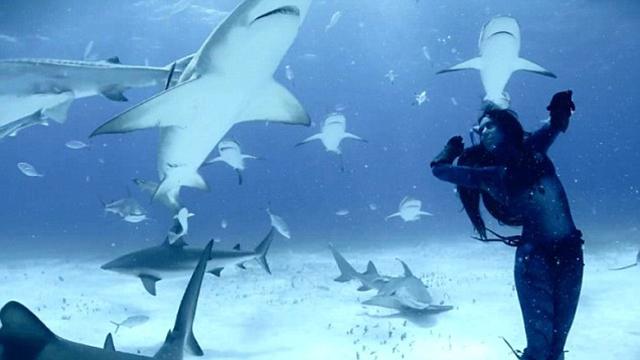 dancing shark video