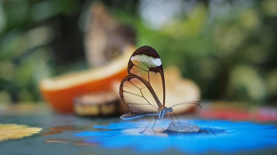 Nature Photographs 51