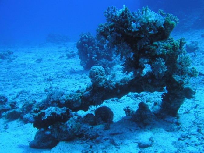 Ocean Mysteries - Gulf of Cambay stone