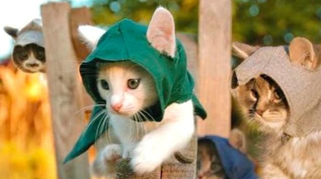 Assassin's Creed Kitten Edition