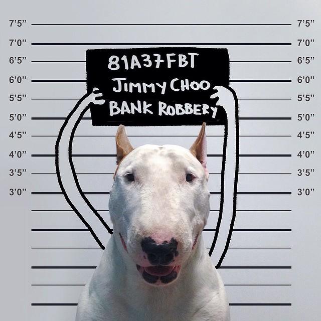 Bull Terrier Cute Illustrations 4