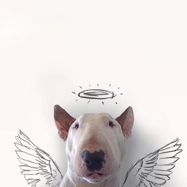 Bull Terrier Cute Illustrations 5