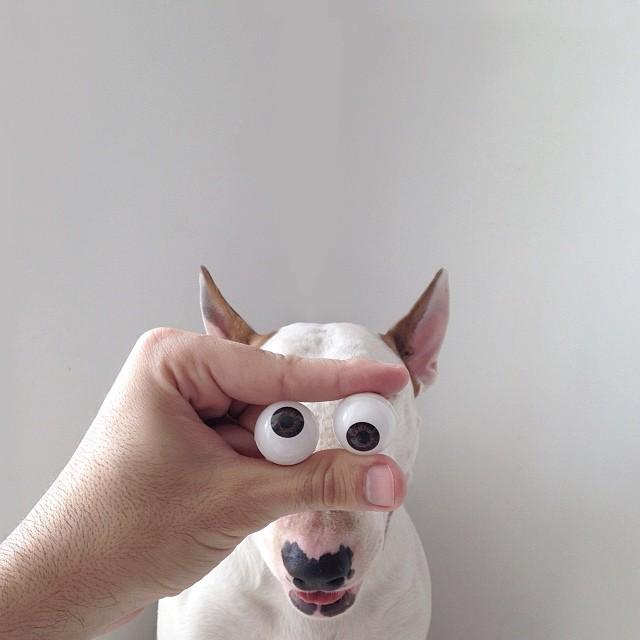 Bull Terrier Cute Illustrations 9