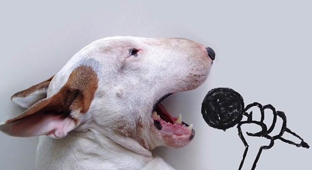 Bull Terrier Cute Illustrations Featured