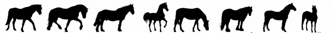 Enumclaw horse scandal - horse silhouette 2 - Copy
