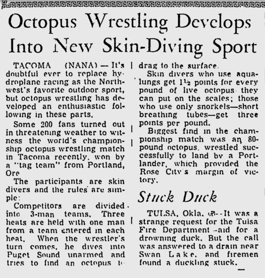 Giant Octopus Wrestling - newspaper cutting