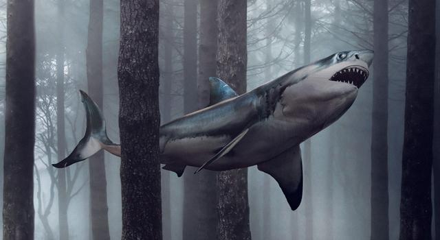TIL Reddit - Sharks Older Than Trees 1