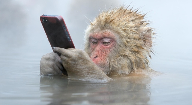Wildlife Photographer Of The Year - 'Facebook Update' by Marsel van Oosten