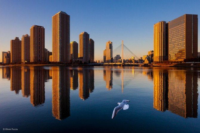 Wildlife Photographer Of The Year - 'View of Tokyo' by Olivier Puccia